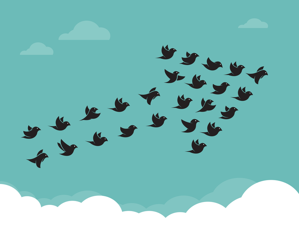crisis leadership; birds flying in formation